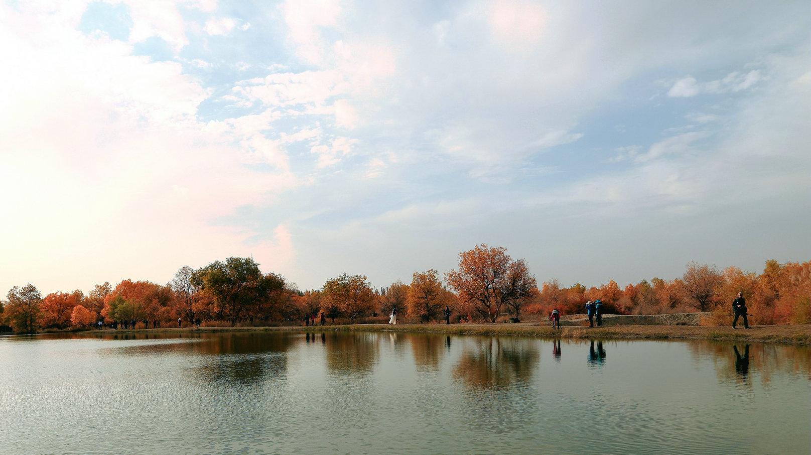 西部设计行--15--金塔胡杨林位于甘肃省金塔县音乐景区谷采风图片