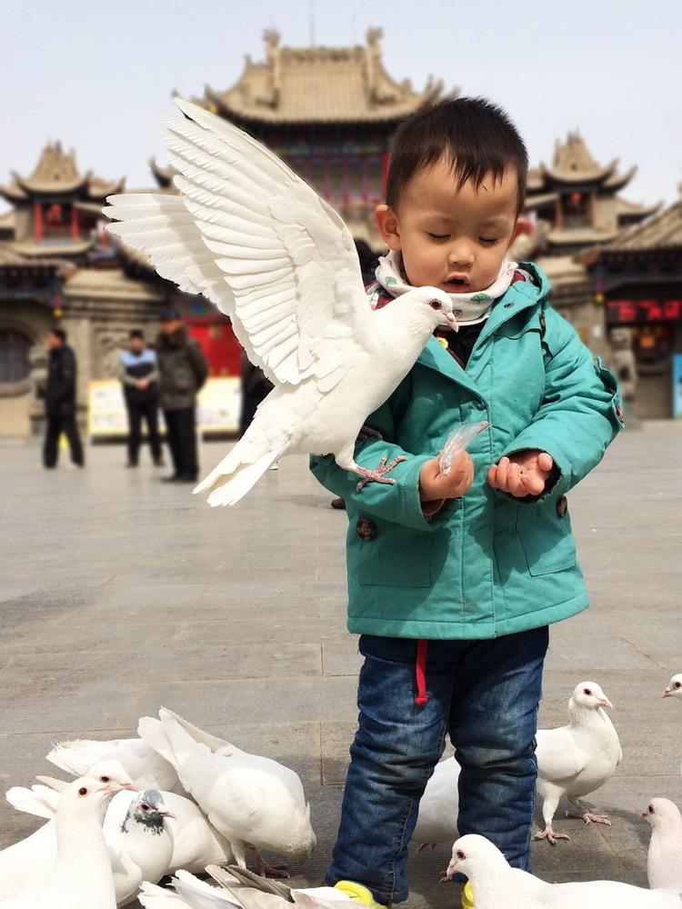 喂鸽子-《大众摄影》俱乐部团体会员--宁夏论坛