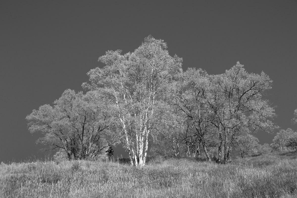 以白桦树为例,做一风景写生的步骤说明。