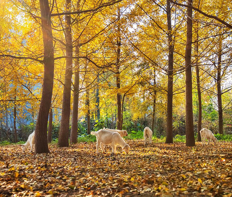 《秋天的童话》   2017-11-6日摄于邳州四户镇白马寺附近