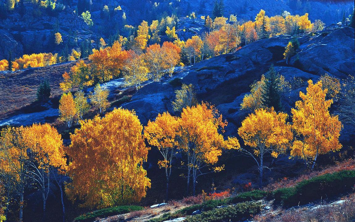 2009年10月3日拍摄于新疆阿勒泰地区国家森林公园富蕴县可可托海景区